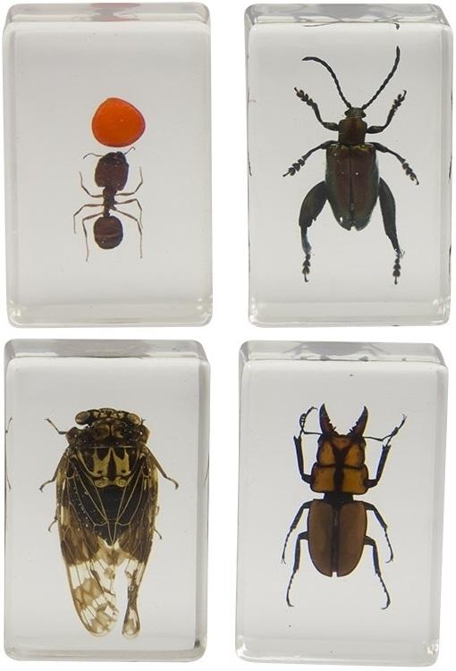 Celestron 3D Bug #3 Specimen Kit