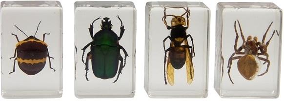 Celestron 3D Bug Specimen Kit 2